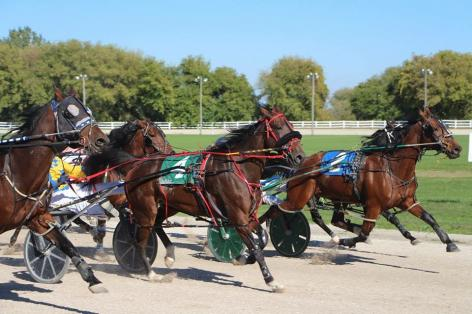 Standardbred Canada Article